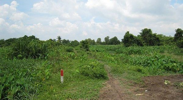 Năm 2020 quy định cấp sổ đỏ cho đất khai hoang như thế nào?